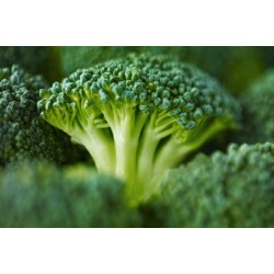 Could this broccoli extract lead to lower levels of heart attacks, blindness and kidney problems?